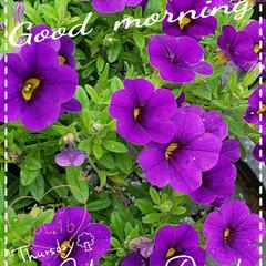 花のある生活/花のある暮らし/リミアのある暮らし/夢の国/フォロー大歓迎 今日も素敵な一日になりますように(♥Ü♥…