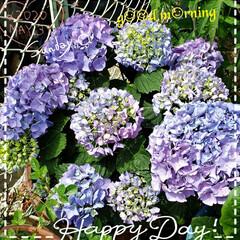 癒しの場所/癒しの空間/花のパワー/お花大好き/庭の花たち/我が家の庭の花/... 今日も素敵な一日になりますように(♥Ü♥…