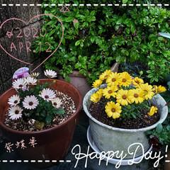 庭の花/パワー/癒しの花/黄色の花/我が家の庭/花のある暮らし/... 今日も素敵な一日になりますように(♥Ü♥…