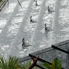我が家からの雪/リミアな暮らし/フォロー大歓迎/雪/LIMIAFESTA/住まい/... 今日は 寒い1日となりました//((´д…