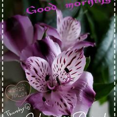 我が家の花/ユリズイセン/百合水仙/玄関の花/花のある生活/花のある暮らし/... 今日も素敵な一日になりますように(♥Ü♥…