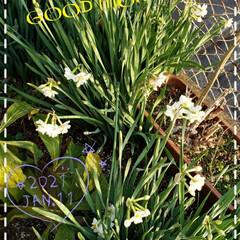 趣味/寒い季節/地植え/庭の花たち/我が家の庭の花/お花大好き/... 今日も素敵な一日になりますように(♥Ü♥…