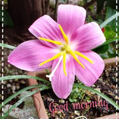 花好き/花の名前/庭の花たち/我が家の庭の花/花のある生活/花のある暮らし/... 今日も素敵な一日になりますように(♥Ü♥…