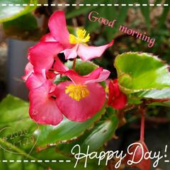 住まい/暮らし/癒しの空間/癒しの場所/花好き/ガーデニング/... 今日も素敵な一日になりますように(♥Ü♥…