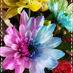 我が家の花/癒しの空間/グラデーションフラワー/花好き/カラフルな花/フォロー大歓迎/... 今日も素敵な一日になりますように(♥Ü♥…