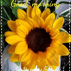 ひまわり/花のある生活/花のある暮らし/我が家の花/玄関の花/フォロー大歓迎/... 今日も素敵な一日になりますように(♥Ü♥…