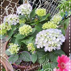 お花大好き/ガーデニング/庭の花たち/我が家の庭の花/花のある生活/花のある暮らし/... 今日も素敵な一日になりますように(♥Ü♥…