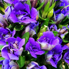 おもしろブーケマリン/ベゴニア/お花大好き/花のある生活/花のある暮らし/リンドウ/... 敬老の日に子供達が 祖父母にあげたお花た…(3枚目)