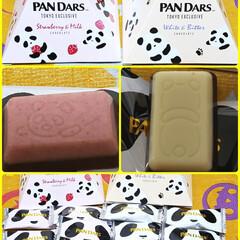 チョコレート/パンダ/PAN DARS/MORINAGA 子供が買ってきてくれた  morinag…