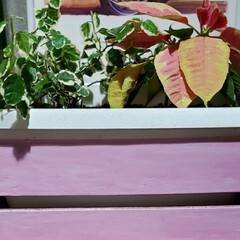 ウッドステイン コスモス WS-14(180ml) | 和信ペイント(Washi Paint)(ニス、ステイン)を使ったクチコミ「先日モニターキャンペーンに当選した  和…」(5枚目)