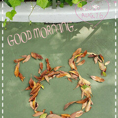 枯れ葉/キャストさんの心遣い/ディズニーランド/花のある生活/花のある暮らし/フォロー大歓迎/... 今日も素敵な一日になりますように(♥Ü♥…