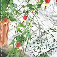 庭の花たち/我が家の花/癒しの空間/花のある生活/花のある暮らし/花のパワー/... 今日も素敵な一日になりますように(♥Ü♥…