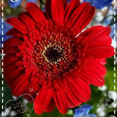 癒しの空間/癒しの場所/お花大好き/ガーデニング/元気の源/我家の花達/... 今日も素敵な一日になりますように(♥Ü♥…