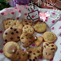 stay home/手作りおやつ/おやつタイム/手作りクッキー/クッキー/おうちカフェ/... ココア、抹茶パウダーも練り込んで クッキ…