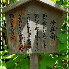 鎌倉/花咲いてなかった/沙羅の樹/長谷寺/花のある生活/花のある暮らし/... 今日も素敵な一日になりますように(♥Ü♥…