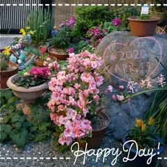 鉢植え/フォロー大歓迎/華やかに/花からのパワー/心の癒し/お花大好き/... 今日も素敵な一日になりますように(♥Ü♥…