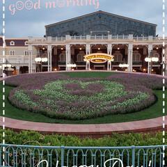 ミッキーマウス/東京ディズニーランド/夢の国/フォロー大歓迎/花 今日も素敵な一日になりますように(♥Ü♥…