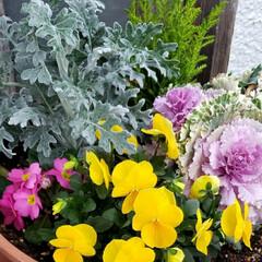 元気の源/鉢植え/庭の花たち/癒しの場所/癒しの空間/お花大好き/... 今日は 雨;(´•௰•`)☂  雨風強く…(5枚目)