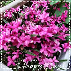 元気の源/元気パワー/癒しの庭/癒しの空間/ガーデニング好き/お花大好き/... 今日も素敵な一日になりますように(♥Ü♥…