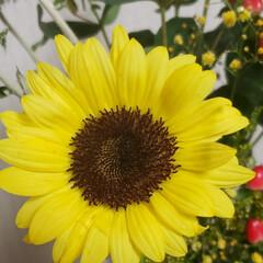 可愛い花/ありがとう/子供たちからのプレゼント/花のある生活/花のある暮らし/花束/... 誕生日に子供達から もらった可愛い花束た…(4枚目)