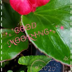 お花大好き/ガーデニング/こぼれ種/鉢植え/庭の花たち/我が家の庭の花/... 今日も素敵な一日になりますように(♥Ü♥…