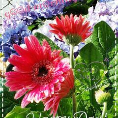 ガーデニング/癒しの空間/元気の源/花のパワー/お花大好き/鉢植え/... 今日も素敵な一日になりますように(♥Ü♥…