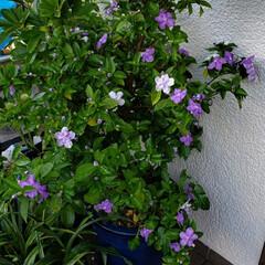 花のパワー/癒しの空間/リミアな生活/リミアのある暮らし/庭の花たち/我が家の庭の花/... 今日も素敵な一日になりますように(♥Ü♥…