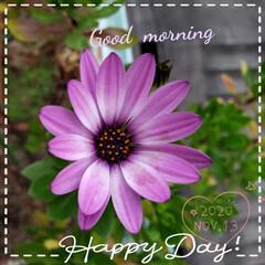 地植え/花大好き/花のある生活/花のある暮らし/リミアのある暮らし/ガーデニング/... 今日も素敵な一日になりますように(♥Ü♥…