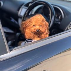 犬がいる暮らし/犬好きな人と繋がりたい/犬好き/暮らし/フォロー大歓迎 凛々しいと思いきや、眩しい〜笑 ボク…男…