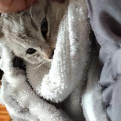 保護猫/野良猫/サクラカット/サクラちゃん/命名/威嚇/... いかく保護子猫ちゃん😼  昨日首輪をお下…(4枚目)