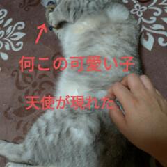猫との暮らし/ニャンコ同好会/猫三昧/キジトラ/サバトラ/三毛猫/... 猫三昧(6枚目)