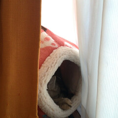 治療/耳ダニ/寄生虫/保護猫/子猫/ニャンコ同好会/... おはようございまーす  先日メル○リで購…(4枚目)