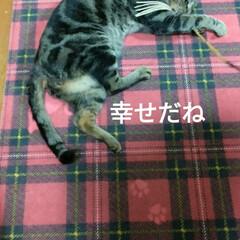 さくら耳猫/悪さ/三毛猫/キャリーバッグ/野良猫から飼い猫へ/里親さん/... 今日は調子悪く 起きれず 起きてから 明…(7枚目)