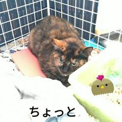 保護猫活動/バイバイ/幸せに/ありがとう/サビ猫/ニャンコ同好会/... 2021年1月10日 正午12半~1時 …(2枚目)