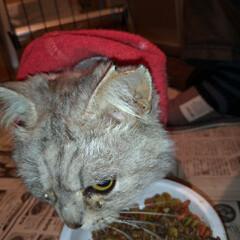 さくら猫の日/避妊手術/涙/さくらねこ/二度目手術/野良猫/... 3月22日は さくらねこの日でした🐱  …(1枚目)