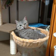 可愛い/猫との暮らし/ニャンコ同好会/サバトラ/メルカリ/キャットタワー部品/... 先日メルカリで キャットタワーの丸いのが…
