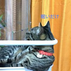 保護猫ケージ/食器棚上/物入れ/ワイヤーネットでバリケード/知恵比べ/猫との戦い/... モモちゃん 歌う♪ テンの雄叫び♪  食…(5枚目)