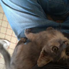 耳ダニ/顔合わせ/バケツ風呂/猫シャワー/ケージ組み立て/スリスリ/... 今回の子猫の ダイソーワイヤーネット簡易…(3枚目)