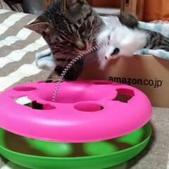 おもちゃ/保護猫/キジトラ/ペット/猫/にゃんこ同好会/... Amazonの箱に 私のファスナー壊れた…