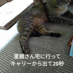 捨て猫/幸せに/不幸な子/譲渡/トマト/ピーマン/... 今日は 凄まじく首と頭が痛い💦 ロキソニ…(1枚目)
