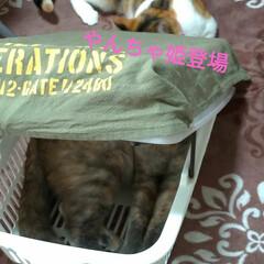猫ベッド/消えた猫/くたびれもうけ/ニャンコ同好会/猫との暮らし/カゴ/... 今日は、換気扇2つ洗い 換気扇周り拭いた…(4枚目)