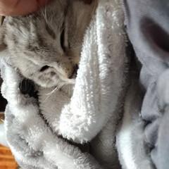 保護猫/野良猫/サクラカット/サクラちゃん/命名/威嚇/... いかく保護子猫ちゃん😼  昨日首輪をお下…(5枚目)