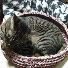メルカリ/ズパゲッティ/ハンドメイド作品/猫お気に入り/ありがとう/猫カゴ/... 先日夜な夜なメルカリを見てて   気にな…