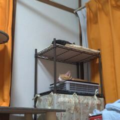 茶トラ白ハチワレ/写真/思い出/猫のいる暮らし/ニャンコ同好会/里親さん/... ここ最近の マルの写真😸  他県に行った…(6枚目)