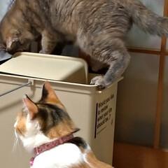 サビ猫/猫根性/粘り強い/蚊/ゴミ箱/猫との暮らし/... 夕方 宅配を取りに出て 蚊が多いので 入…(4枚目)