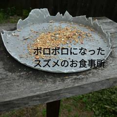 ミニ井戸/つるむらさき/オクラ/作業/家庭菜園作り/寝落ち/... おはようございます☁️  昨夜は、21時…(7枚目)