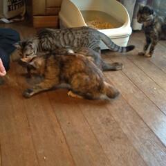 6匹飼い/里親募集/猫のいる暮らし/ブチ切れ/お手伝い/避妊手術/... 先日の母の職場の方の猫相談 一時間半程話…