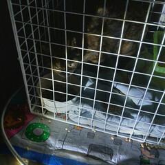 猫運動会/お世話/保護猫/野良猫/猫との暮らし/猫 夜のボボちゃんの お世話完了😸  チビ達…