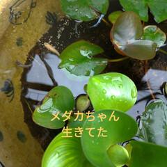 やる気無し/キャットウォーク/ニャンコ同好会/猫との暮らし/種/家庭菜園作り/... (1枚目)