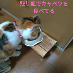 食べ過ぎ/熱/孫/子猫/掃除/坐骨神経痛/... 今日は クーラーつけても湿度72%で 除…(1枚目)